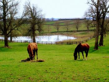 At Ferması
