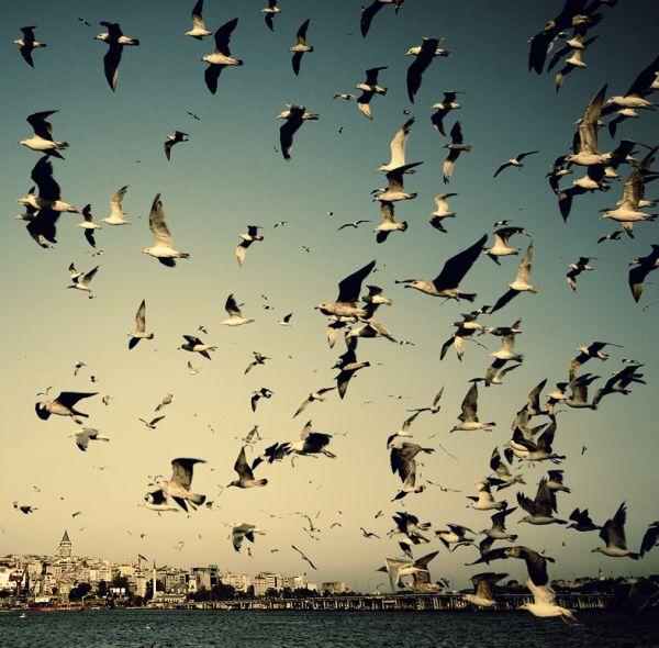 Ay uçan quşlar ...