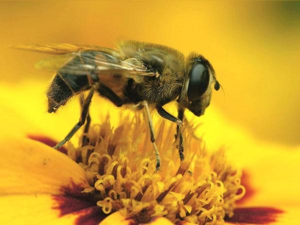 Bal arısı ilə müalicə