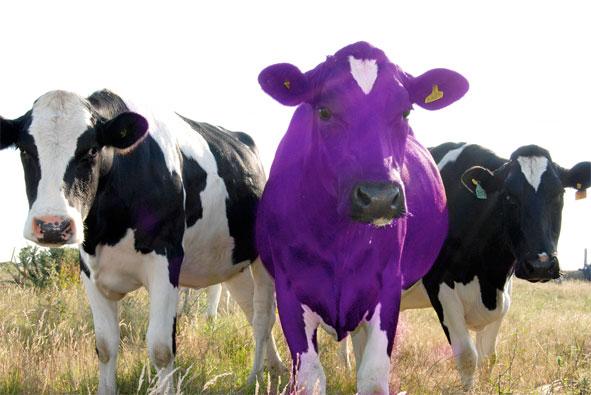 Bənövşəyi İnək  (Purple Cow) Nədir ?