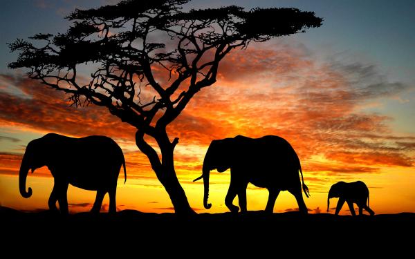 Fillərin qəlbi qırılarsa ...