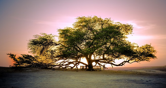 Solomon Adalarında Ağac Kəsmənin Maraqlı Hekayəsi
